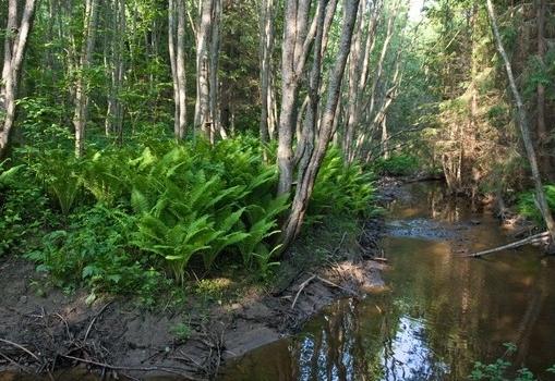 Приток реки Вонюх весной. Черенков Сю