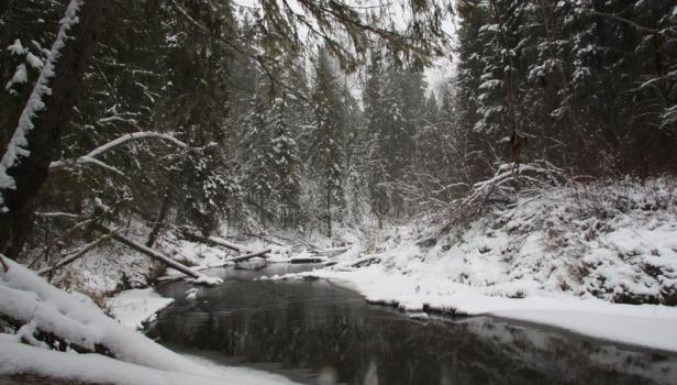 Река Понга в ноябре. Кологривский участок. Терентьев А.
