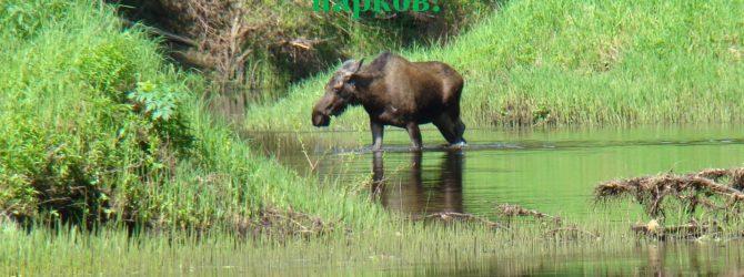 11 января – День заповедников и национальных парков.