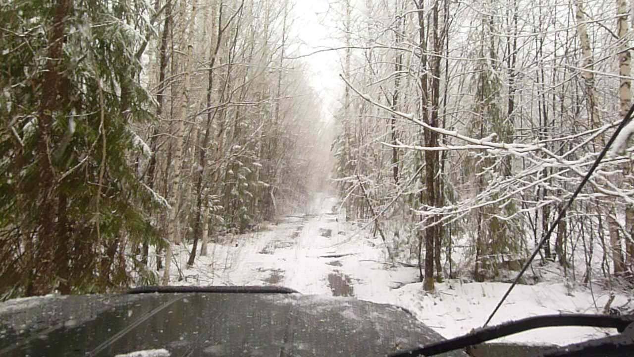 Дорога на Кологривском участке заповедника