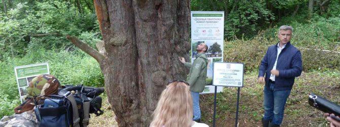 Уромская сосна - Памятник живой природы (у деревни Урма Кологривского района Костромской области)