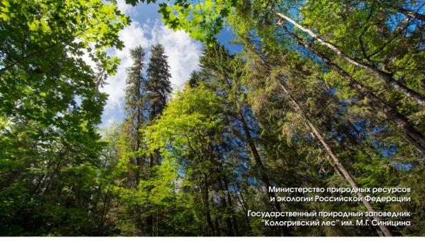 Истории Кологривского леса