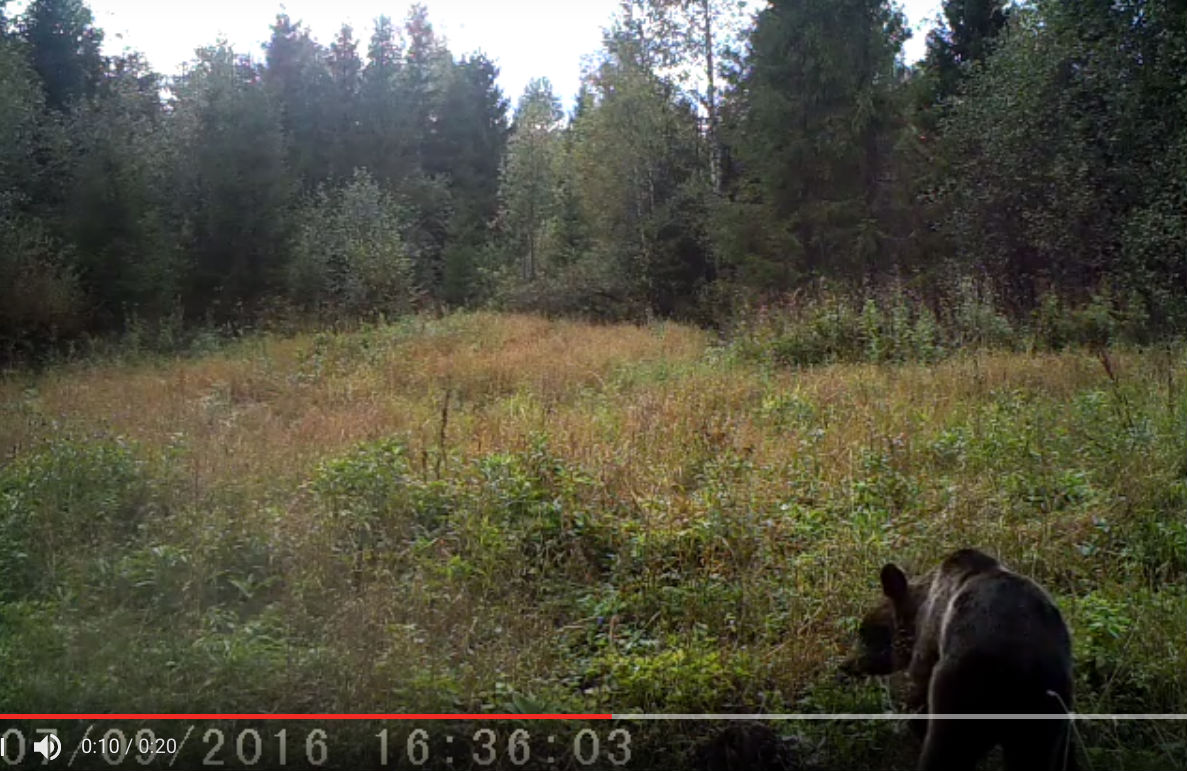 Новые сюжеты с лесных камер